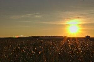 Sonnenuntergang in Bodenheim