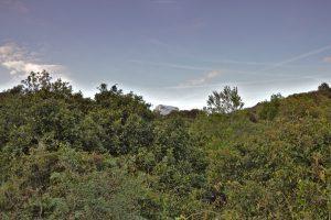 16b Traumstellplatz am Cap Sicié hinter Les Sablettes