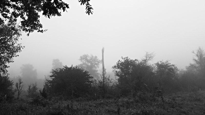 Leopoldshafen im Morgennebel