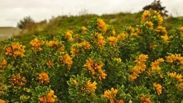 Blüten in Carro