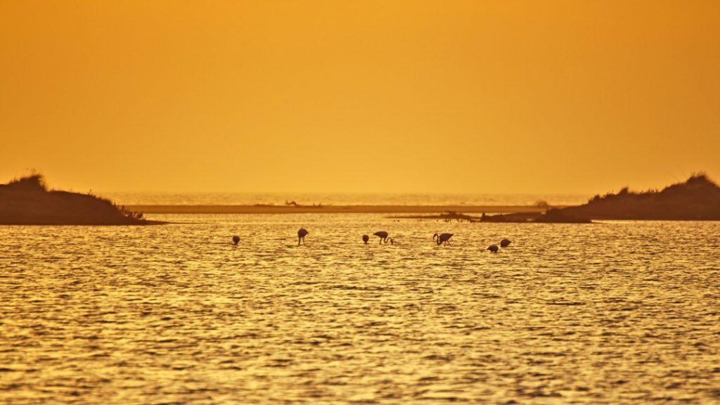 Flamigos im Sonnenuntergang