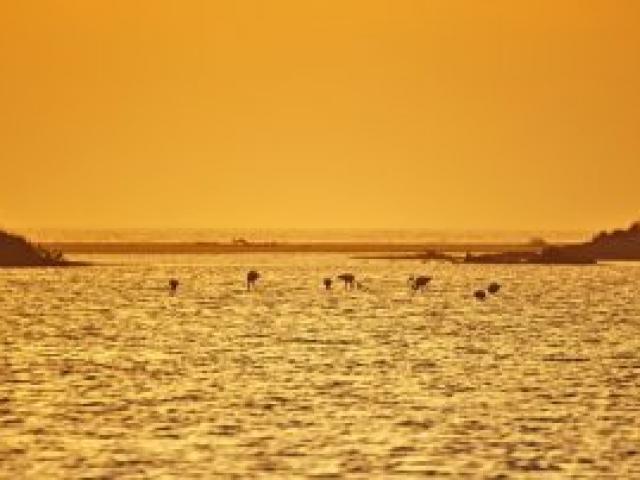 15a Flamigos im Sonnenuntergang