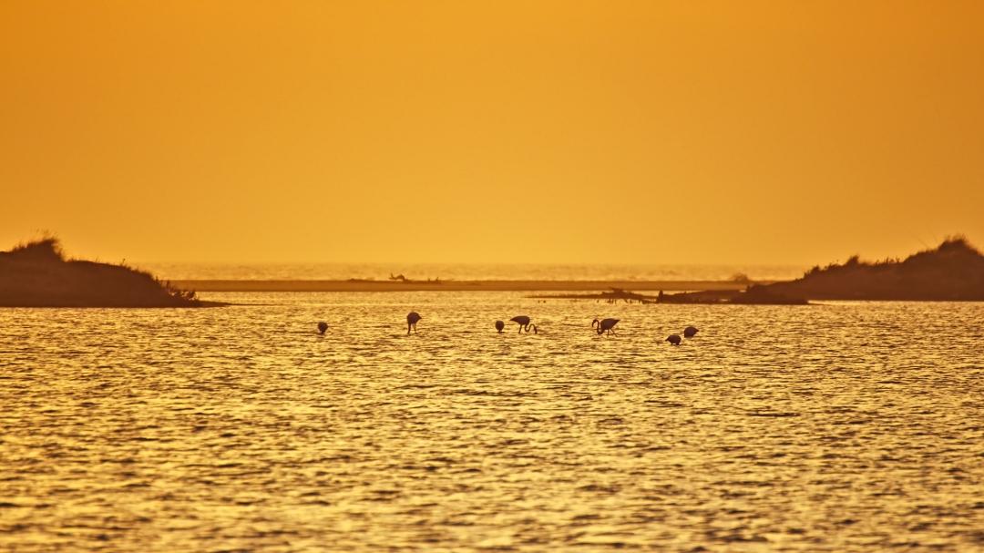 Flamigos im Sonnenuntergang am Plage de Piémanson