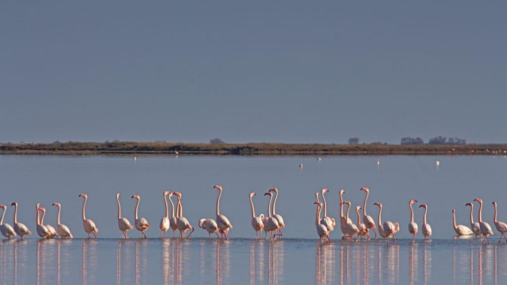18h Diskussion bei der Flamingos