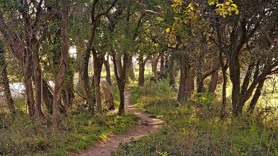 Weg zwischen le Somail und Mirepeisset