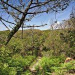 Wälder um Messanges