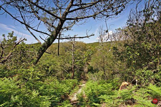 14a Die Wälder im Landes