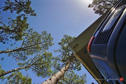 20b Im Wald von Cap Ferret