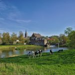 Hauts-de-France - Maroilles