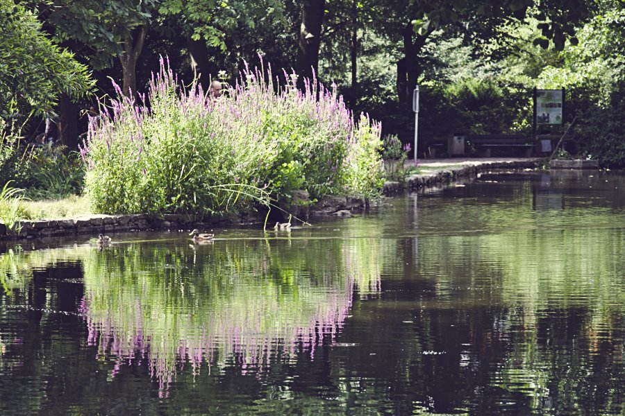 Aschaffenburg Park Schöntal