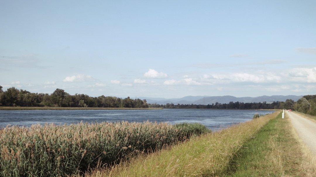 Der Rhein bei Kappeln