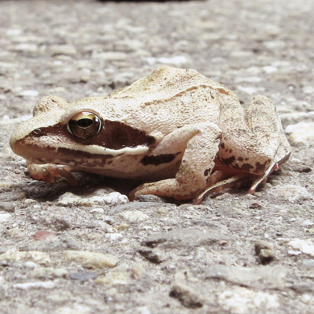 Ein Frosch halt