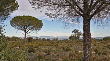 18c Plaines des Maures