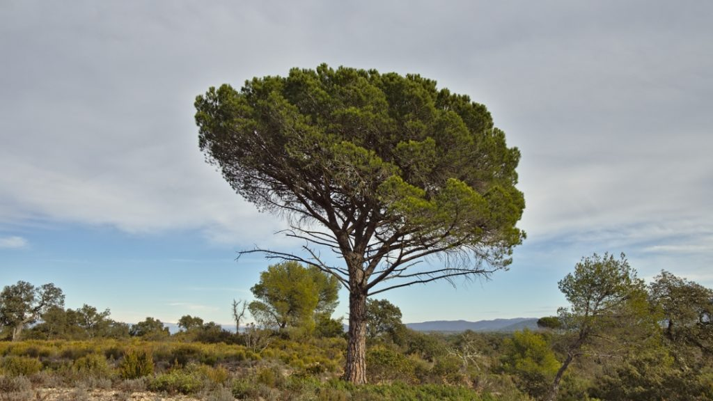 18b Plaines des Maures