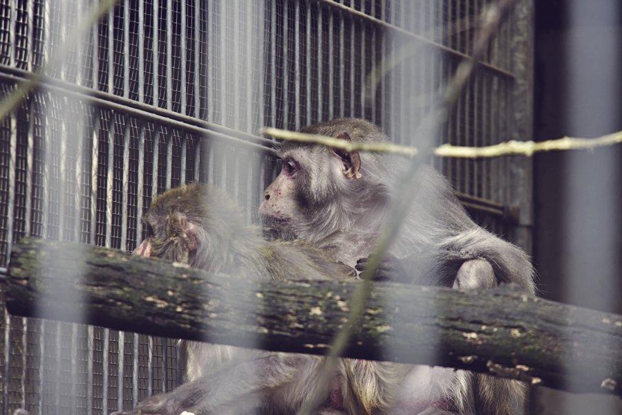 Schwanheimer Bahnstraße Kobelt-Zoo