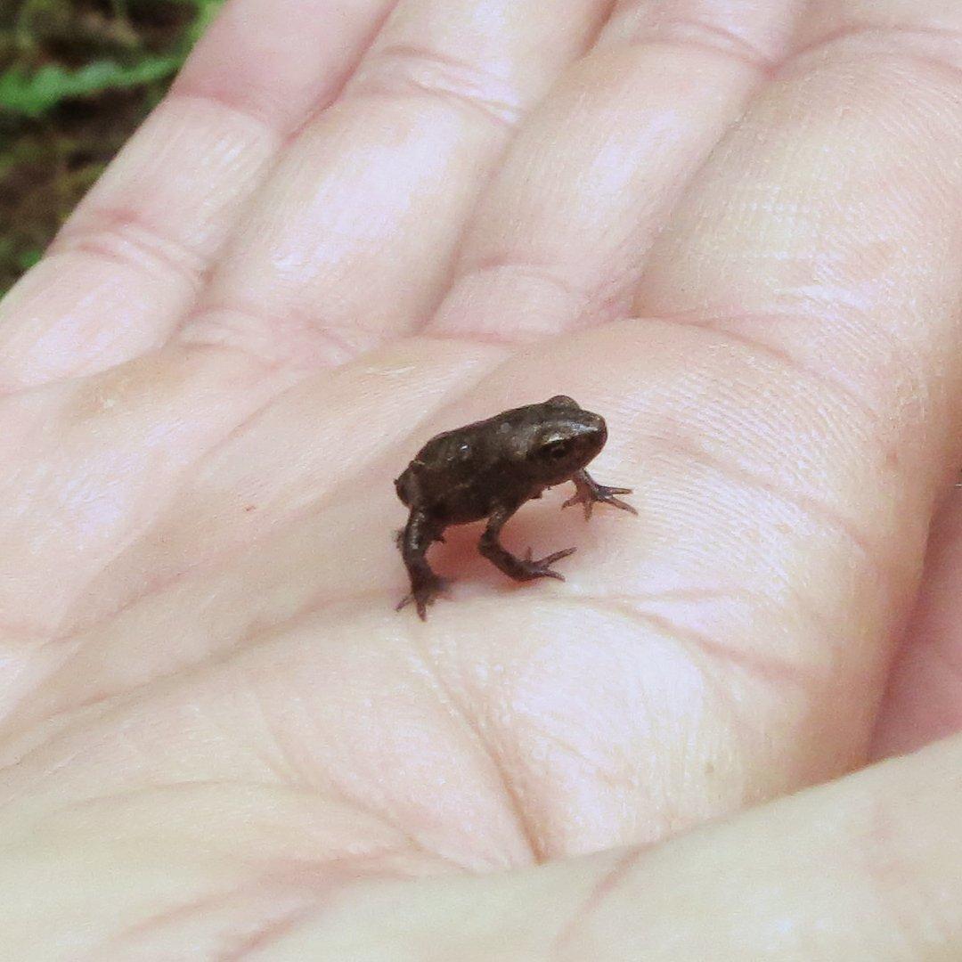Junger Frosch